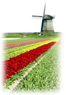 Netherlands windmill with tulips field, VerdeTax.com