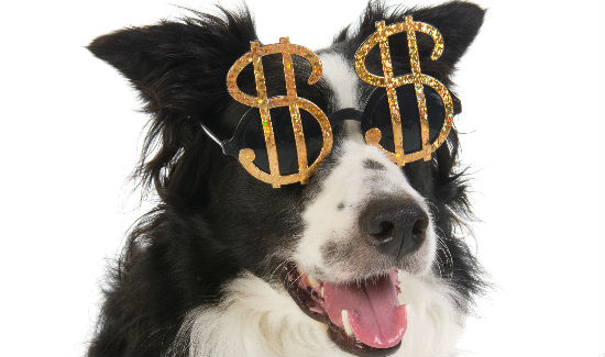 Dog with funny looking dollar glasses